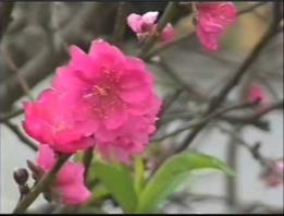 Embedded thumbnail for Bồng bềnh tiên nữ Hà Giang