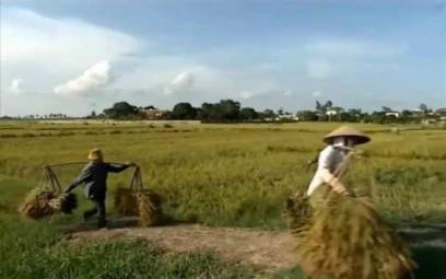 Embedded thumbnail for Đồng làng
