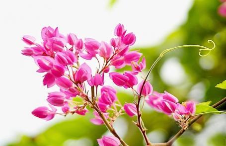 Hoa trong nhạc